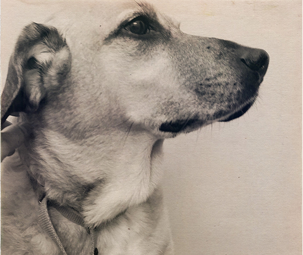 5 Reasons To Adopt An Older Dog