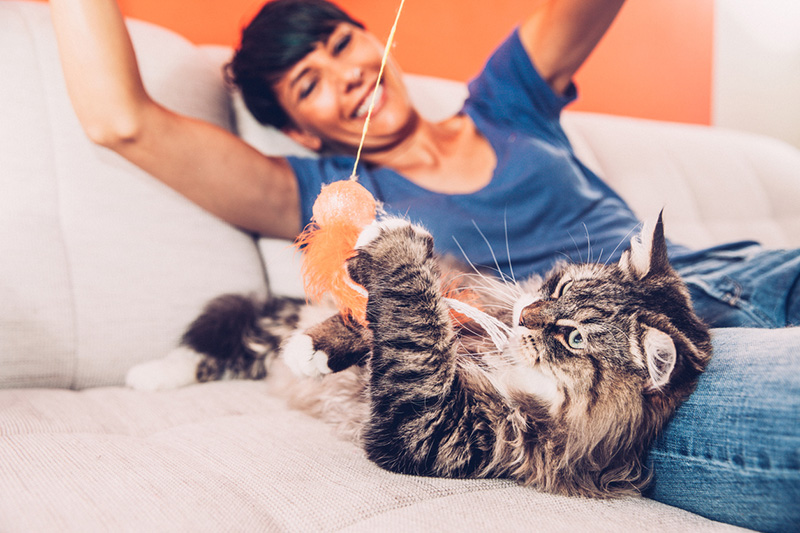 Professional Cat Sitting by Stayin' Home Pet Care | Austin, TX